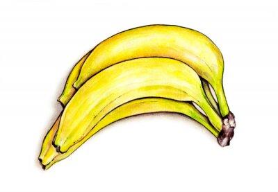 Adesivo Mazzo di banane isolato su sfondo bianco. Illustrazione dell'acquerello