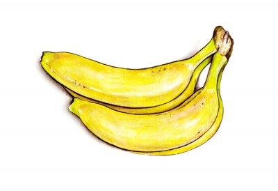Adesivo Mazzo di banane isolato su sfondo bianco. Illustrazione dell'acquerello. Frutta tropicale