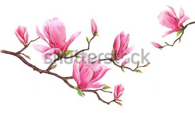 Adesivo Modello della carta con la magnolia dell'acquerello Pittura disegnata a mano sul fondo bianco Illustrazione per biglietti di auguri, inviti e altri progetti di stampa. C'è spazio per mettere i