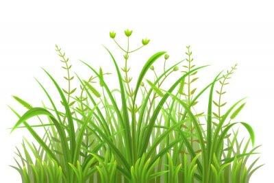 Adesivo modello erba verde su sfondo bianco