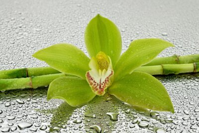 Adesivo Mokra orchidea z bambusem