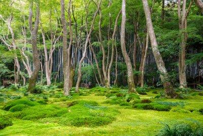 Adesivo Moss vista sul giardino in Arashiyama, Kyoto