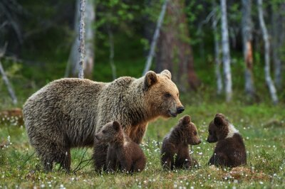 Adesivo Mother bear and cubs