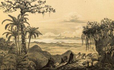 Adesivo Natura del Sud America.