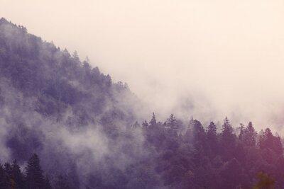 Adesivo Nebbia nella foresta