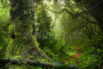 Adesivo Nepal jungle