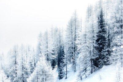 Adesivo Neve foresta coperta