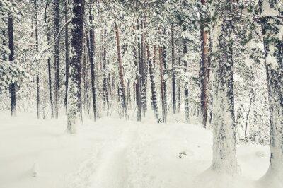 Adesivo Nevicate nella foresta di inverno.
