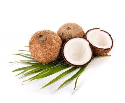 Adesivo noce di cocco su sfondo bianco
