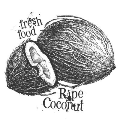 Adesivo noce di cocco su sfondo bianco. schizzo