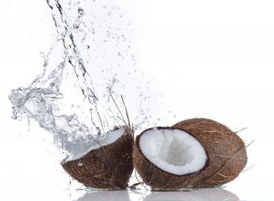 Adesivo Noci di cocco con spruzzi d'acqua
