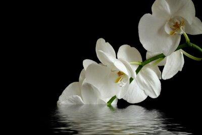 Adesivo orchidea riflessione