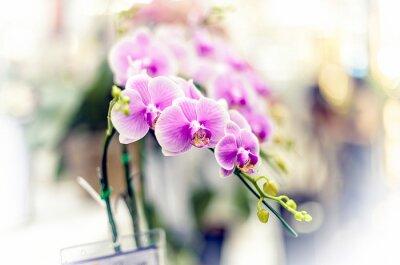 Adesivo Orchidee