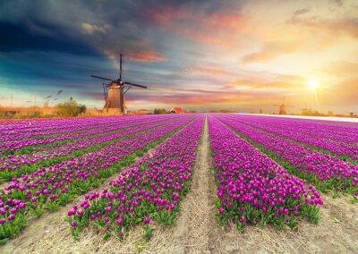 Adesivo Paesaggio con tulipani, mulini a vento tradizionali olandesi e case vicino al canale a Zaanse Schans, Paesi Bassi, Europa