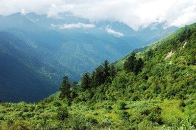 Adesivo paesaggio della foresta di montagna e la valle