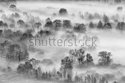 Adesivo Paesaggio in bianco e nero, la foresta nebbiosa, Italia