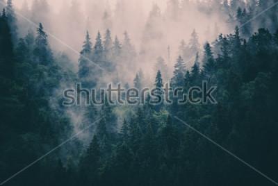 Adesivo Paesaggio nebbioso nella foresta di hipster retrò in stile vintage