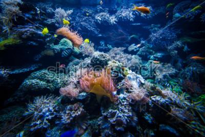 Adesivo paesaggio sottomarino barriera corallina con pesci colorati