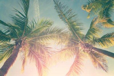 Adesivo Paesaggio tropicale con palme e cielo soleggiato