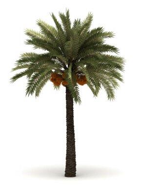 Adesivo Palm Tree Singolo