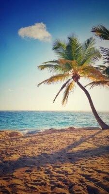 Adesivo Palma su un'isola tropicale