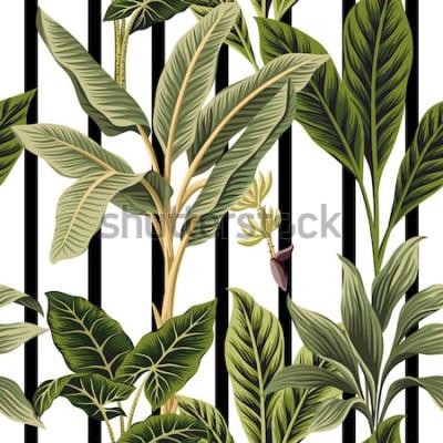 Adesivo Palme d'annata tropicali, fondo in bianco e nero delle bande del modello senza cuciture floreale del banano. Carta da parati esotica della giungla botanica.