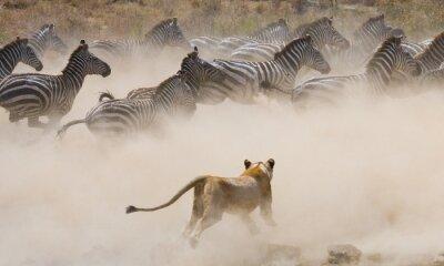 Adesivo Parco Nazionale. Kenya. Tanzania. Masai Mara. Serengeti. Un ottimo esempio.