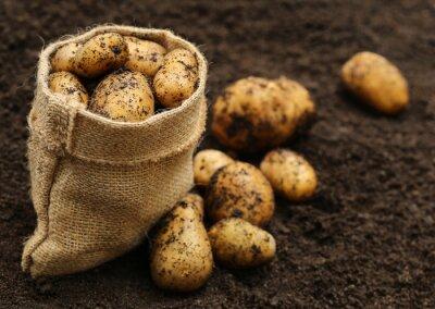 Adesivo Patate appena raccolte