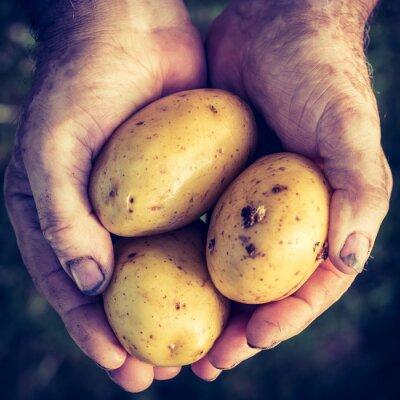 Adesivo Patate fresche in mani