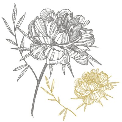 Adesivo Peony flower and leaves drawing. Hand drawn engraved floral set. Botanical illustrations. Great for tattoo, invitations, greeting cards