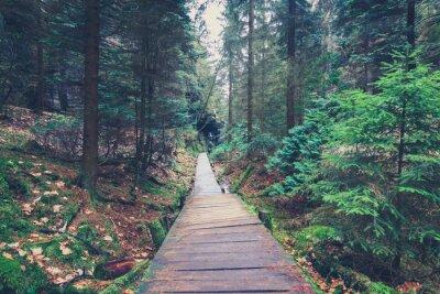 Adesivo percorso all'interno del paesaggio foresta hiking