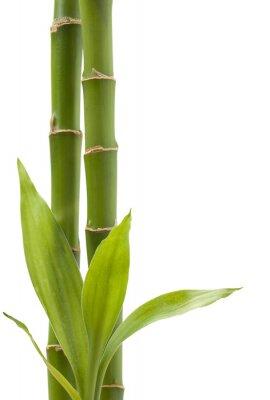 Adesivo Pianta Di Bambù
