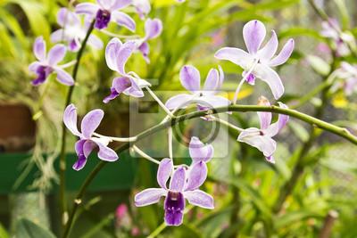 Fiori Piccoli.Piccoli Fiori Di Orchidea Adesivi Per Il Computer Portatile