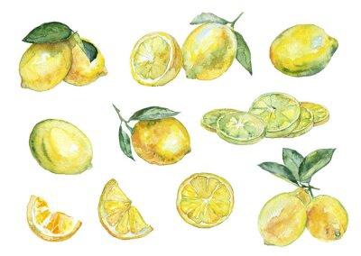 Adesivo pittura ad acquerello. Vintage set di limoni.