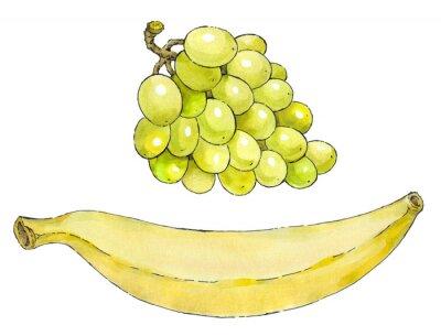 Adesivo Pittura dell'acquerello di una serie di frutta: uva e banane