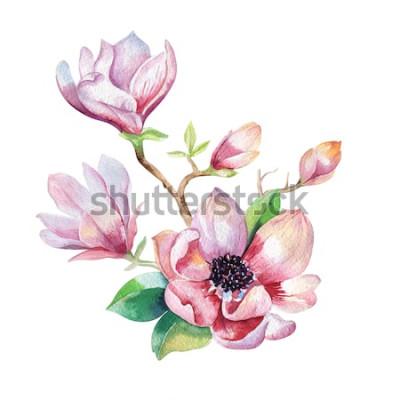 Adesivo Pittura di fiori di magnolia. Illustrazione floreale dell'acquerello disegnato a mano Elemento naturale decorativo floreale. Sfondo acquerello vintage.