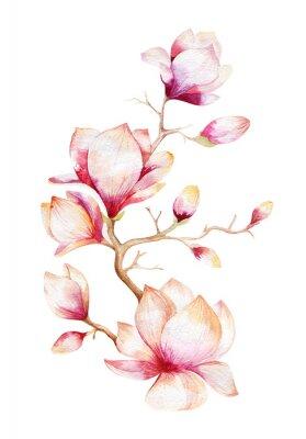 Adesivo Pittura Magnolia fiore carta da parati. Disegnata a mano Acquerello floreale