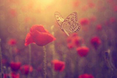 Adesivo Poppy e la farfalla