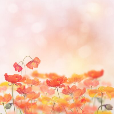 Adesivo Poppy Flowers Blossom