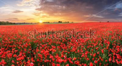 Adesivo Poppy flowers meadow and nice sunset scene