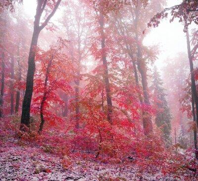 Adesivo prima neve in autunno
