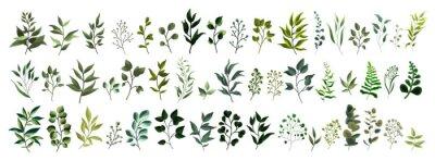 Adesivo Raccolta delle foglie tropicali delle erbe della foresta della pianta della foglia della pianta