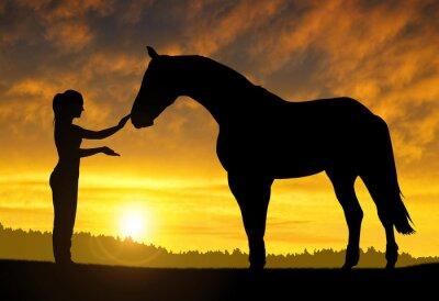 Adesivo Ragazza con un cavallo al tramonto