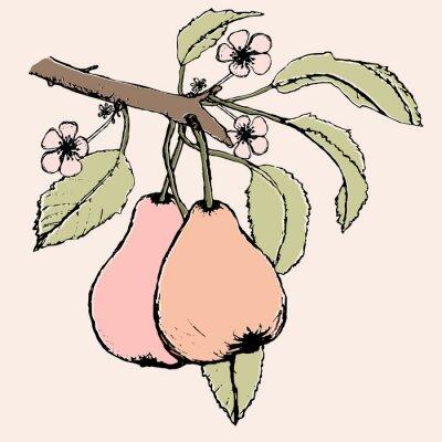 Adesivo Ramo disegnato a mano con coppia di pere, fiori e foglie