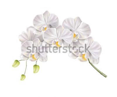 Adesivo Ramo realistico del fiore dell'orchidea bianca con i germogli sul gambo. Invito a nozze elegante, design decorazione salone spa. Carta di invito matrimonio vettoriale, elemento di evento romantico
