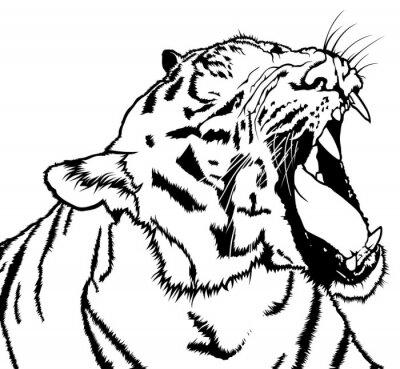 Adesivo Roaring Tiger - in bianco e nero Disegno illustrazione, vettore