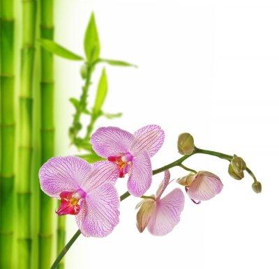Adesivo rosa orchidea e bambù - sfondo spa