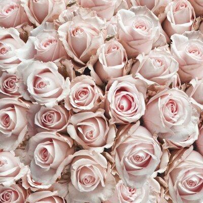 Adesivo Rosa rose d'epoca