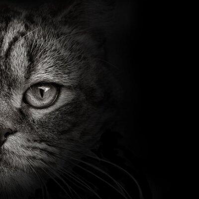 Adesivo scuro muso gatto primo piano. vista frontale