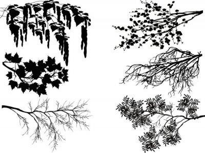 Adesivo sei rami degli alberi di primavera su bianco